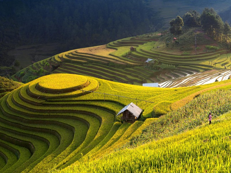Rice-scape-Mu-Cang-Chai-Vietnam-800×600