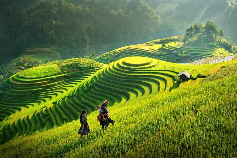 Travelbay_Vietnam_Tours_-_Rice_Fields_Sapa